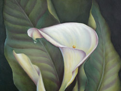 Calla Lily with Waterdrop