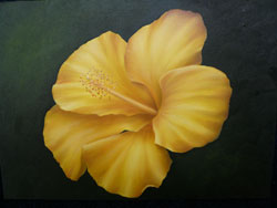 Golden Hibiscus